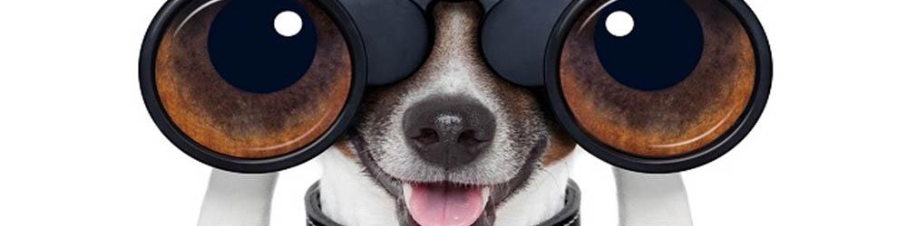 Wdt el perro guardián de arduino